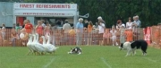 Brackley%20Carnival%2007%20geese%20and%20dogs 2007
